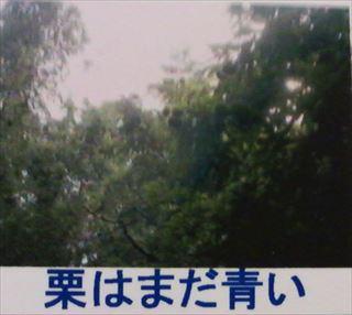 TS3R0489_R.JPG